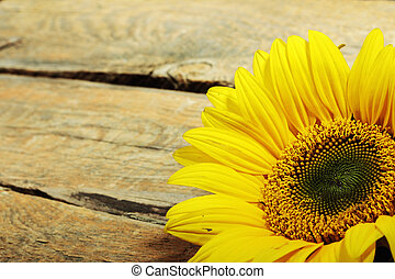Sunflower - One yellow sunflower on old wooden background