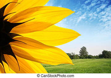 Sunflower over countryside landscape