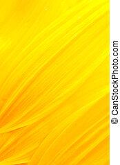 Sunflower petals - Extreme macro shot. Abstract background...