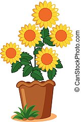 Sunflower plant in the pot