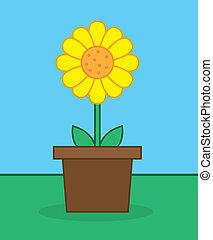 Sunflower Pot - Yellow sunflower in pot outside