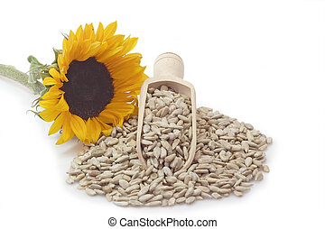 Sunflower seeds on a bright background