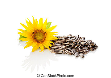 Sunflower seeds. - Sunflower blossom and sunflower seeds ...