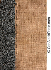 sunflower seeds were lying on sackcloth, with space for text