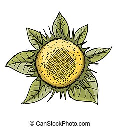Sunflower, sketch for your design