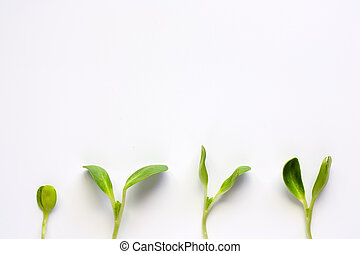 Sunflower sprout plant on white background