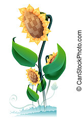 Sunflower - a group of sunflower on the white background