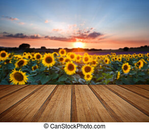 Sunflower Summer Sunset landscape with blue skies with wooden planks floor