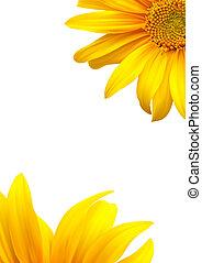 Sunflower template background