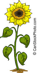 Sunflower on a white background vector illustration