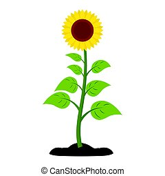 Sunflower Vector icon.