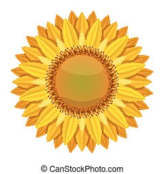Sunflower vector isolated on white background. Yellow sun flower