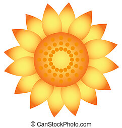 Vector sunflower. Isolated on white.