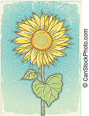 Sunflower .Vector vintage postcard with grunge elements