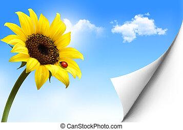sunflower., wektor, tło, żółty, natura
