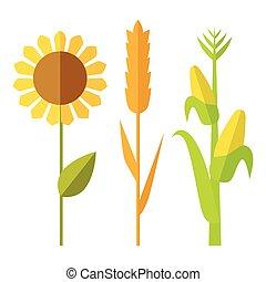 Sunflower, wheat, corn vector illustration.
