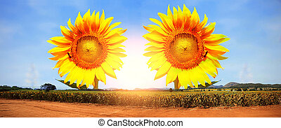 Sunflower with a beautiful panorama.