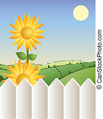 sunflower with fence - an illustration of two bright ...