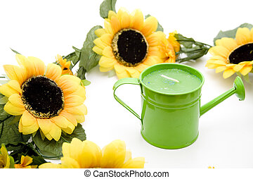 Sunflower with green watering can