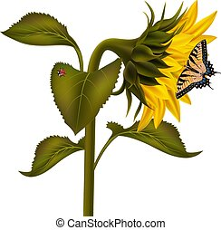 Sunflower with ladybird and swallowtail butterfly