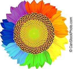 Sunflower with petals of different colors of the rainbow.