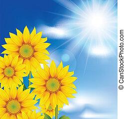 sunflowers against the sky