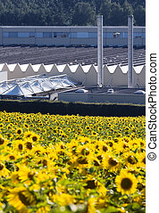 Sunflowers and industry - Field of sunflowers in front of a...