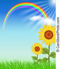 Sunflowers and rainbow - Sunflowers, grass and rainbow