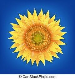 Sunflowers Flower With Blue Background