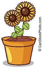 Sunflowers in clay pot illustration