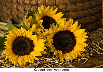 Sunflowers in front of old beehive