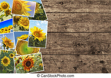 Sunflowers in summer - photo collage.