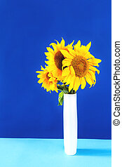 Sunflowers in white vase on blue background