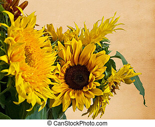 This stock image is several sunflowers with old vintage paper background with plenty of room for custom text message.