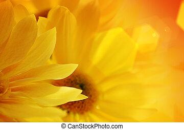 Sunflowers over sunset
