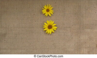Sunflowers pattern appears. Stop motion time lapse animation