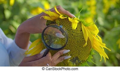 Sunflowers seeds under magnifying glass outdoors