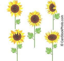 sunflowers set vector