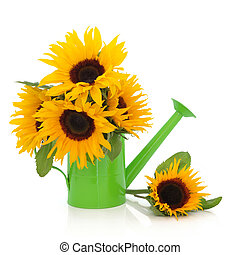Sunflowers - Sunflower arrangement in a green watering can ...