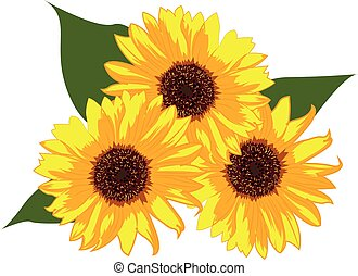 Sunflowers vector illustration on a white background isolated