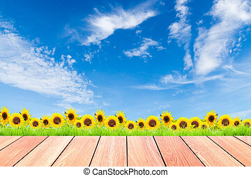 sunflowers with green grass against blue sky background and plank wood foreground