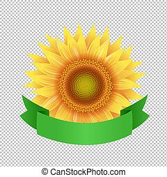 Sunflowers With Green Ribbon Transparent Background