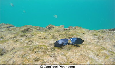 Sunglasses on the sea bed around the swimming exotic fish