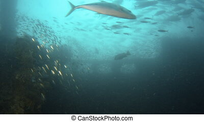 Sunken ship becomes a home for fish - A close shot of a...