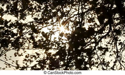 Sunlight, and Black Leaves