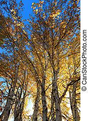 sunlight behind birch tree in autumn