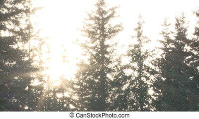 Sunlight Blaze Snow Forest slow