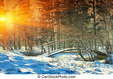 Sunlight breaks through the trees in winter.