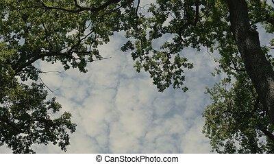 Sunlight Cloudy Sky Through the Trees