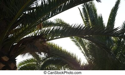 Sunlight flashing through a branch of palm tree